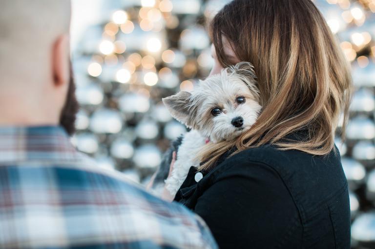 dog, engagement, photo, edmonton, yeg, talus balls, dome
